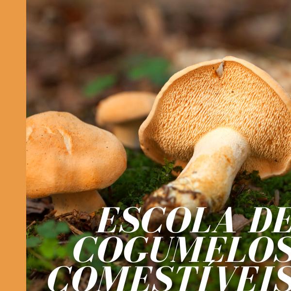 Cogumelos com lâminas: Amanita caesarea; Tricholoma equestre